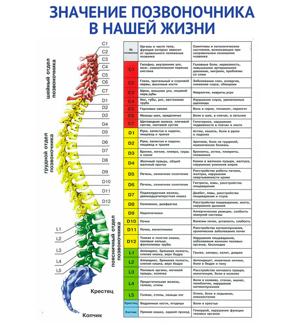 Свинг-машина Healthy Spine Gess